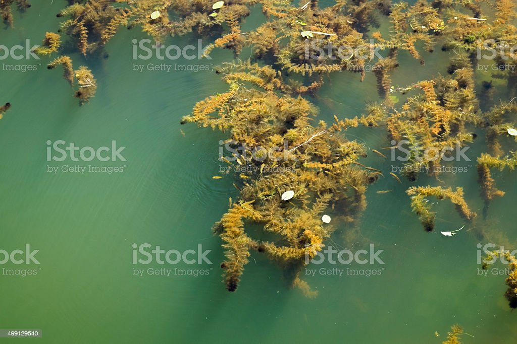 Algae in the water canal stock photo