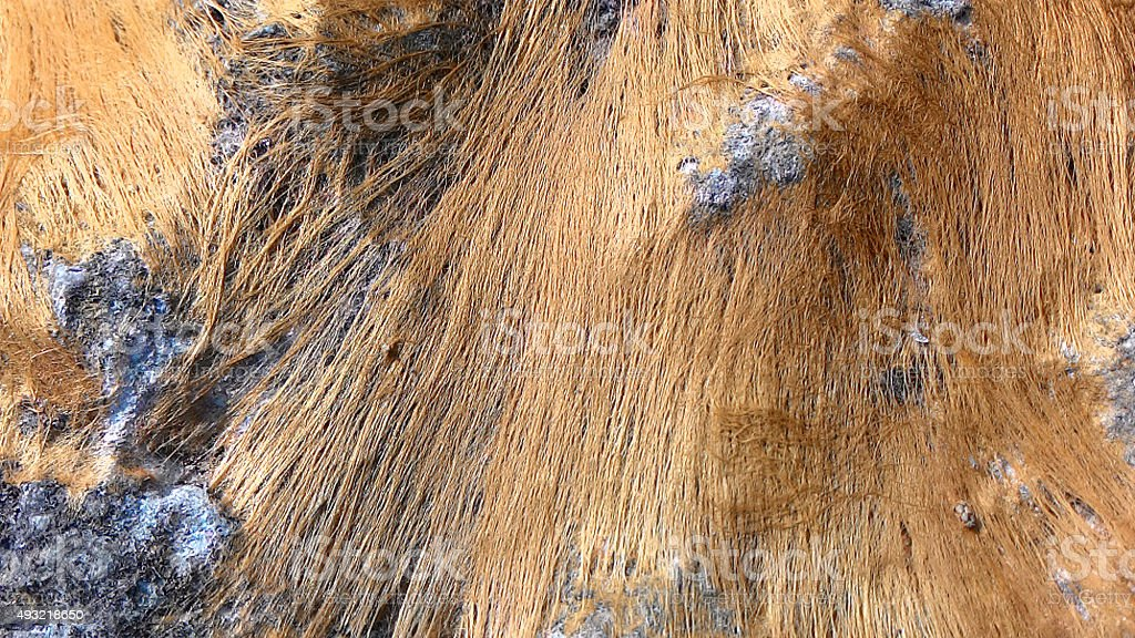 Algae on a rock stock photo