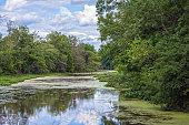 Algae on the River