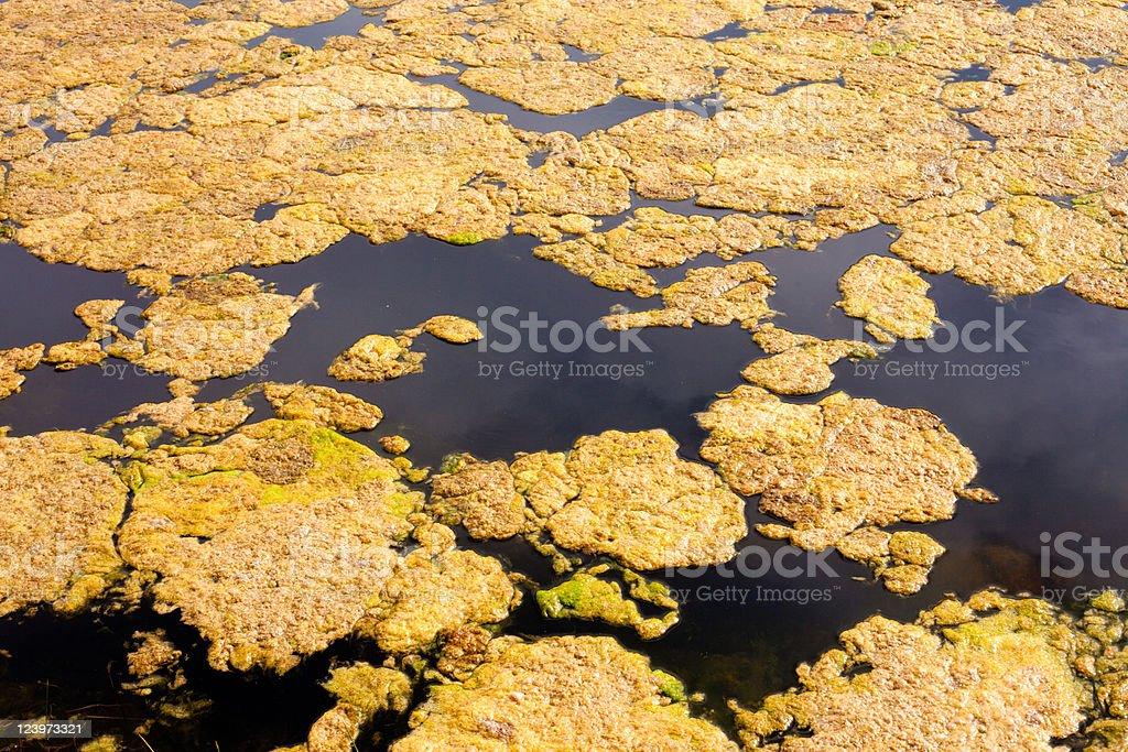algae on water surface royalty-free stock photo