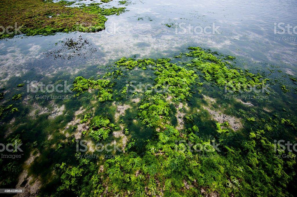Algae stock photo