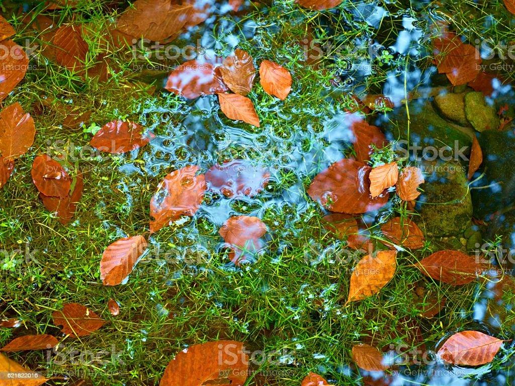 Algae with fallen  leaves  on basalt gravel in mirrored stream. stock photo