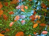 Algae with fallen  leaves  on basalt gravel in mirrored stream.