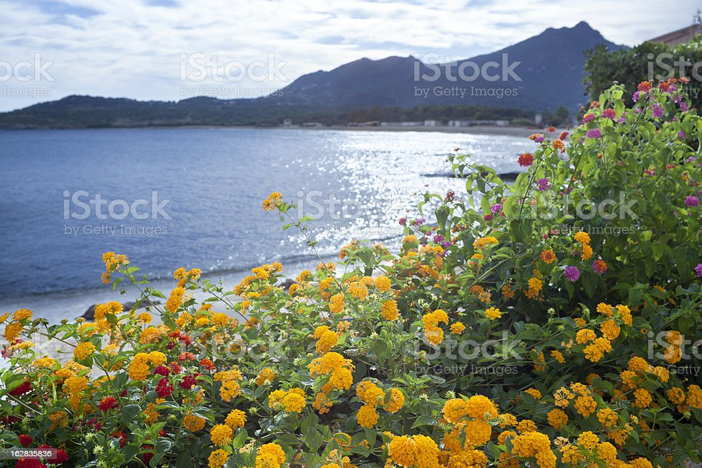 Algajola Bay With Flowers In The Foreground, Corsica France royalty-free stock photo