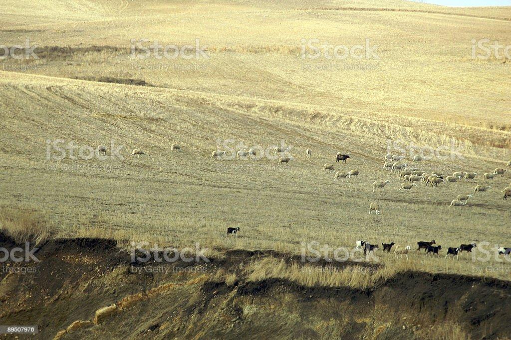 Algerian Countryside stock photo