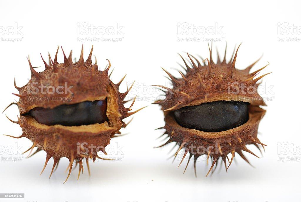 alien eyes royalty-free stock photo