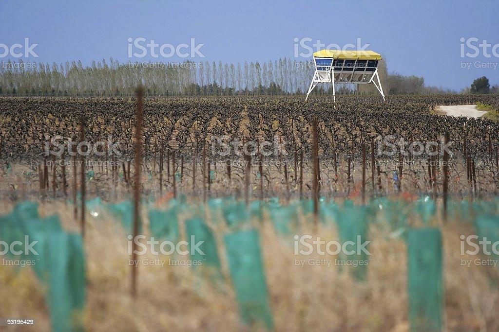 Alien starship in the vineyard? stock photo