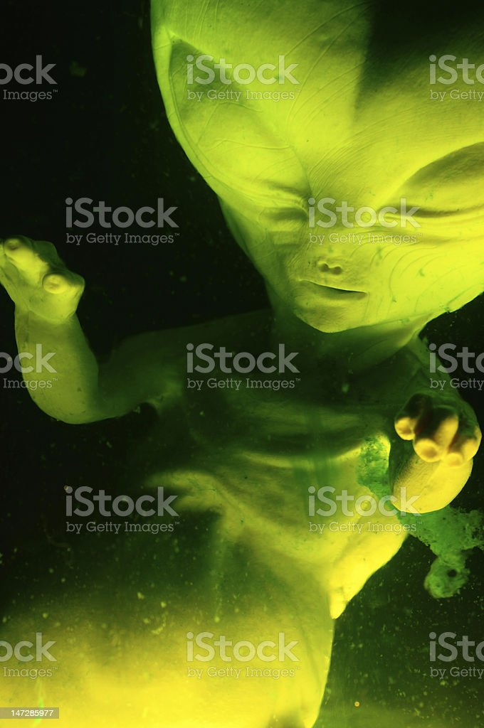 Alien Suspended in fluid stock photo