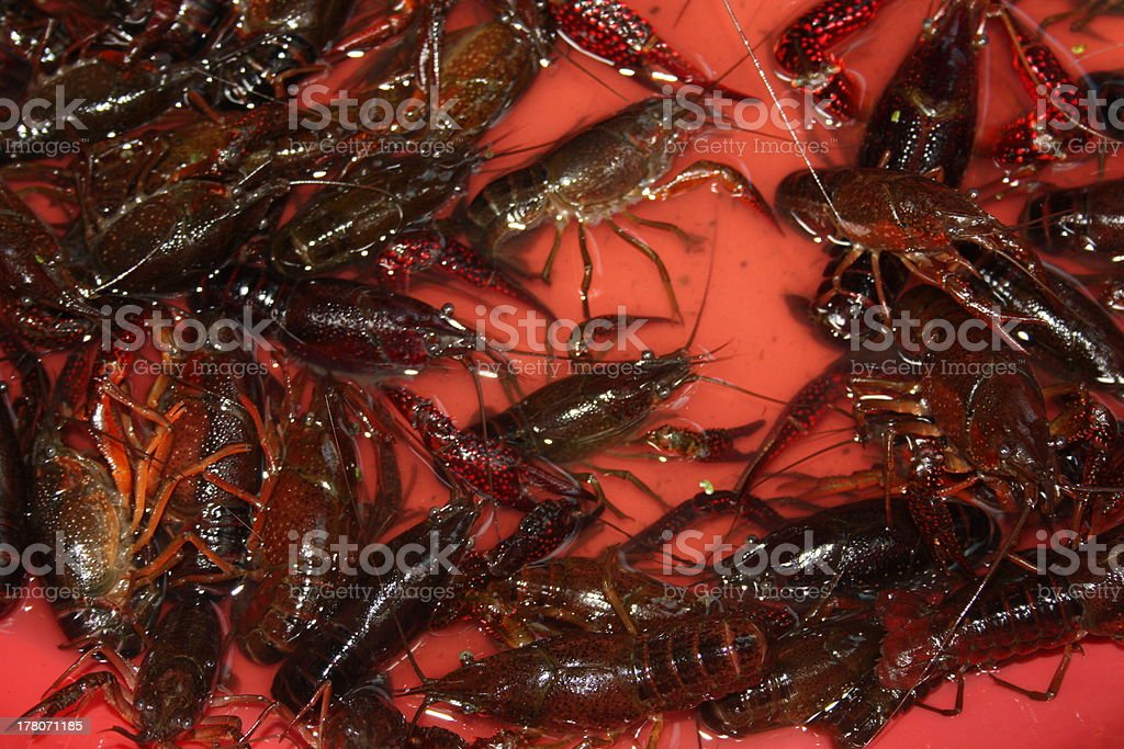 Alive Crayfish, Fresh Chinese Food in a Red Pan royalty-free stock photo