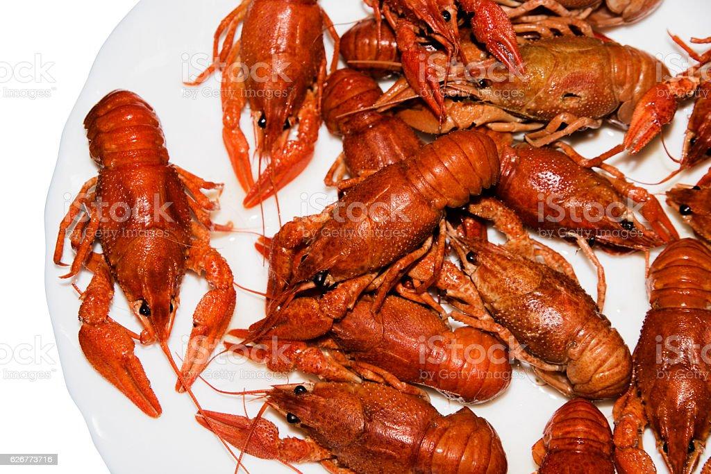Alive crayfish isolated on white background. stock photo