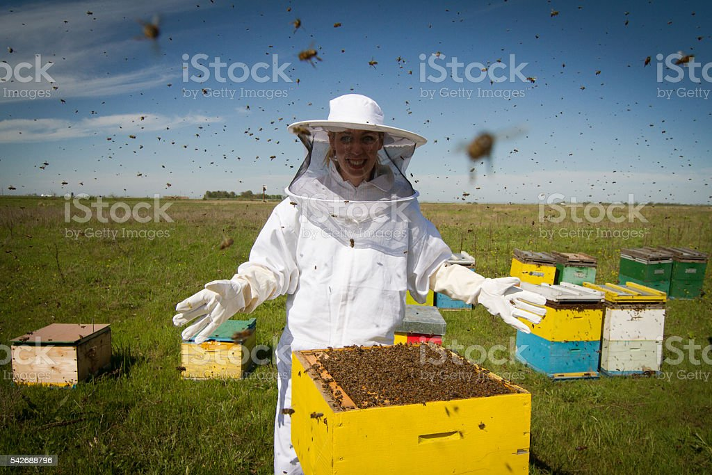 All bees are mine stock photo