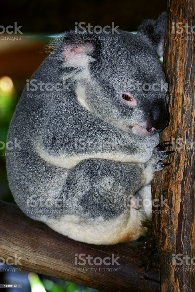 All Curled Up royalty-free stock photo