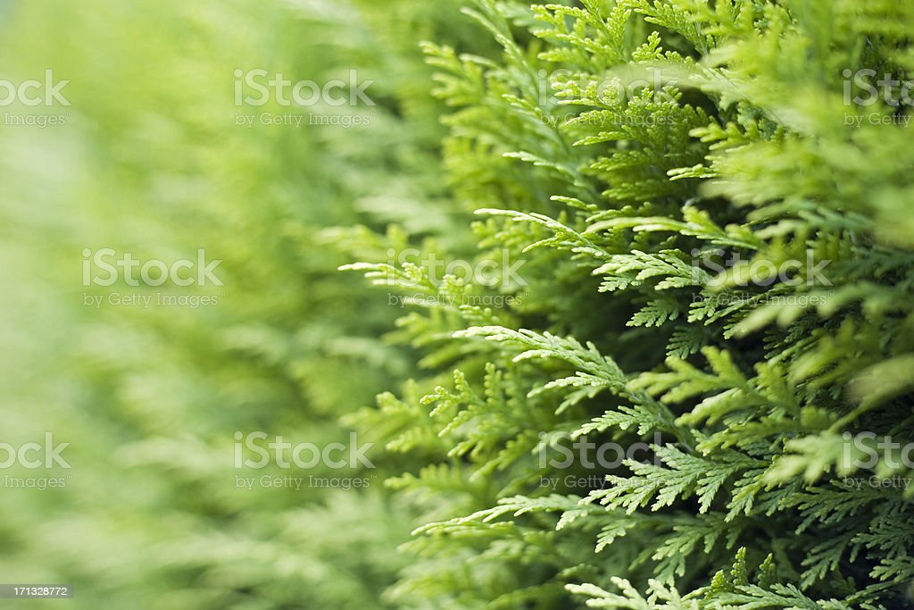 all green stock photo
