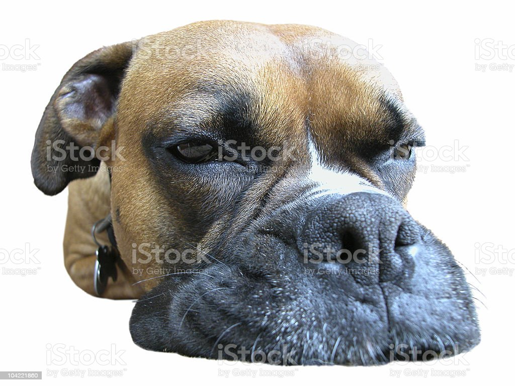 All in a days work royalty-free stock photo
