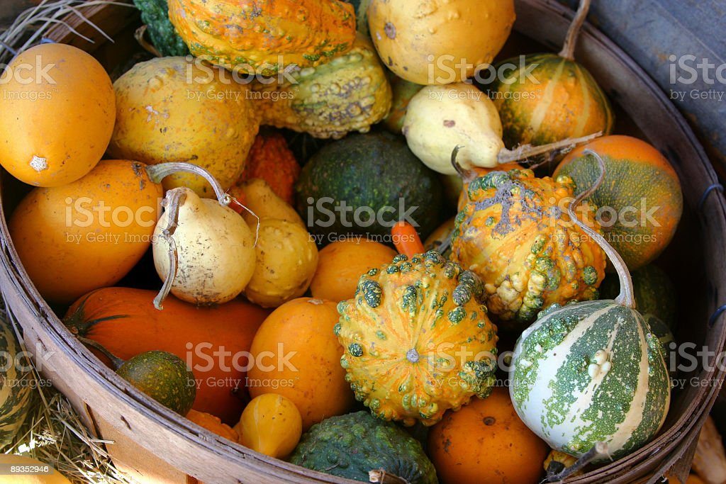 All Kinds of Gourds royalty-free stock photo