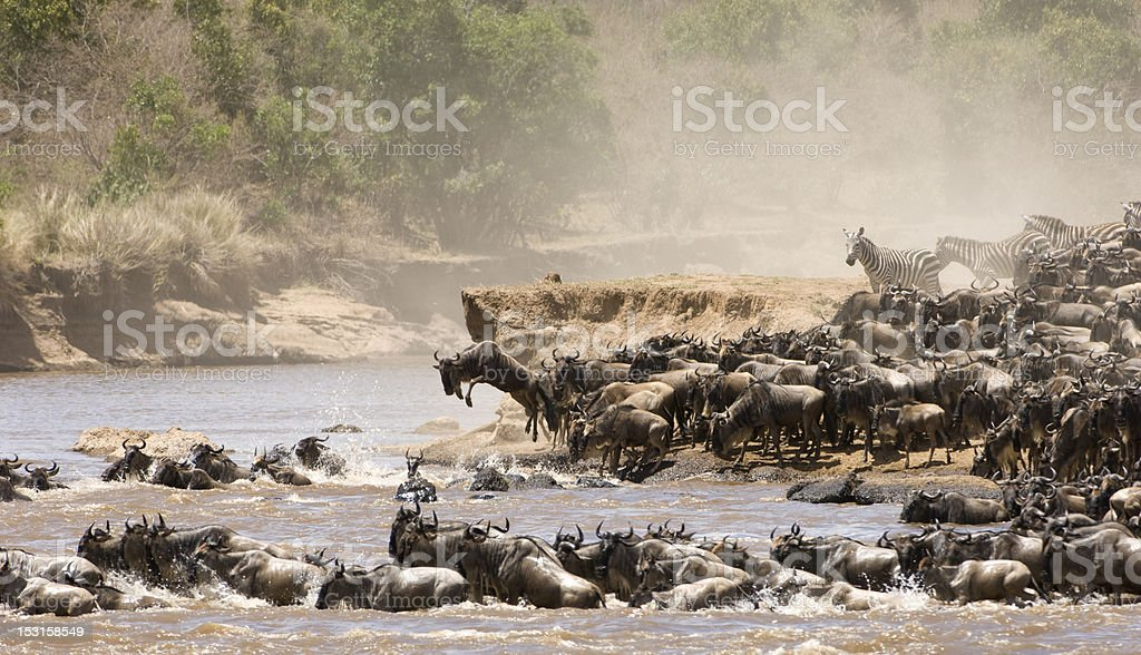 All kinds of wild animals crossing a river stock photo