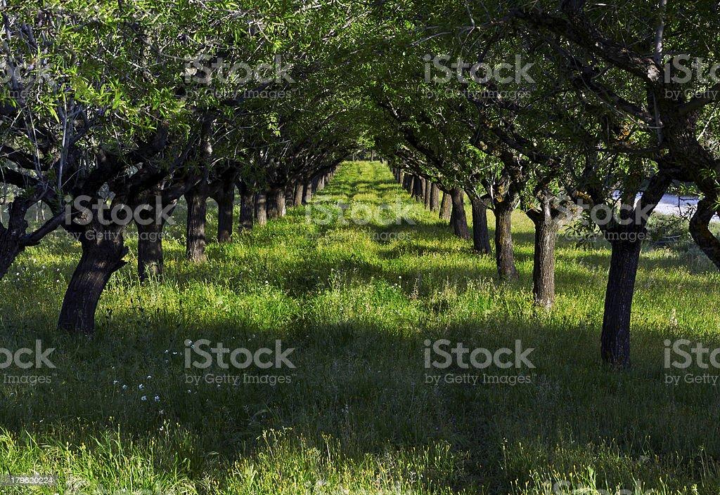 Allée d'arbres au printemps stock photo