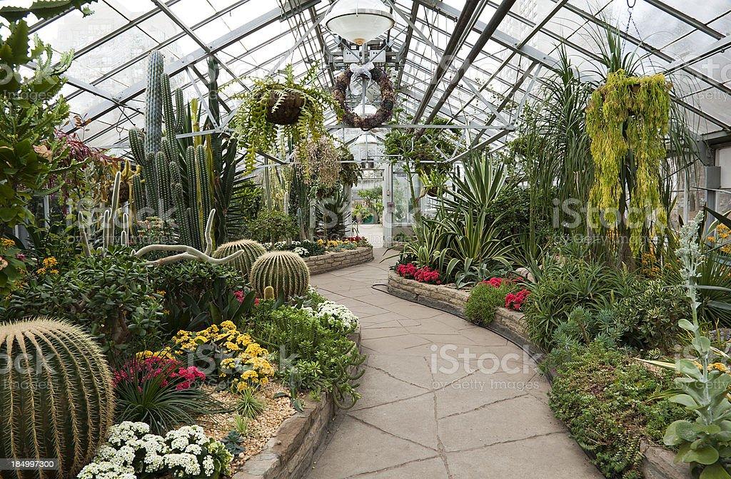 allen jardines cactus efecto invernadero foto de stock libre de derechos