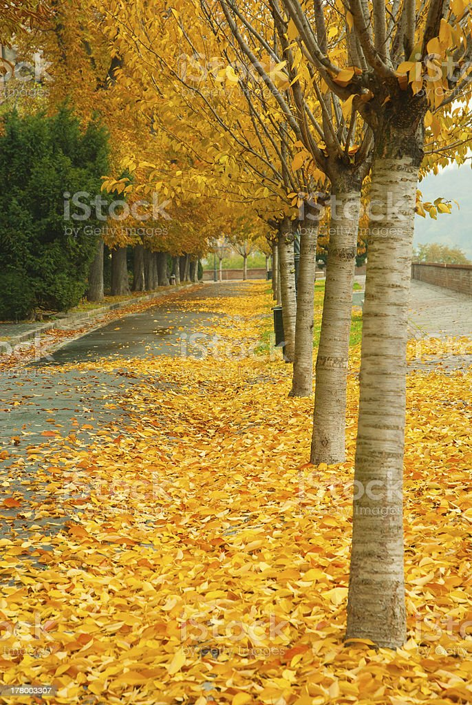 Alley at fall stock photo