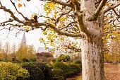 Alley autumn park, fallen leaves