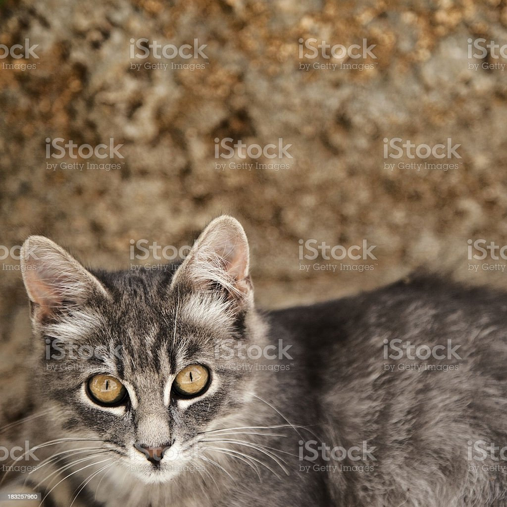 Alley Cat Sitting On The Ground stock photo