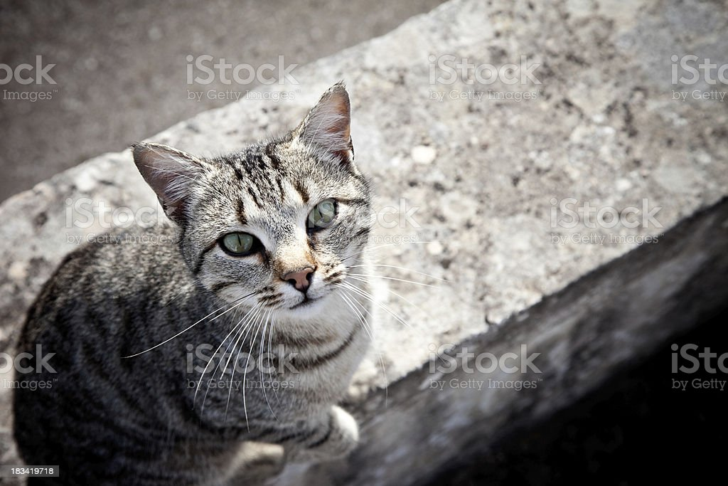 Alley Cat Sitting On The Ground royalty-free stock photo