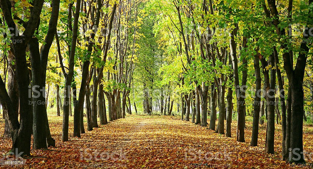 Alley in a park with colorful trees and sunlight stock photo