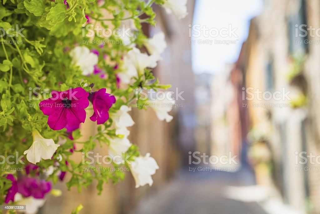 Alley in Abruzzo country. stock photo