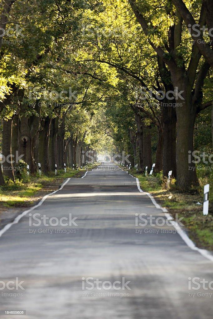 Alley in autumn stock photo
