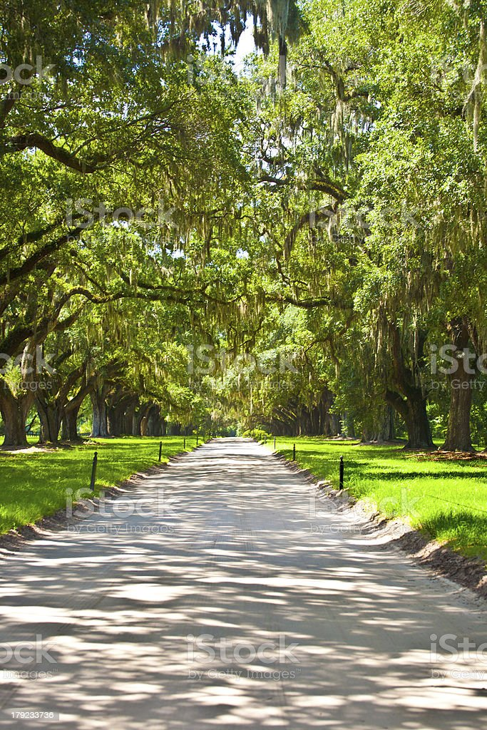 OAK alley in entrance of Plantation royalty-free stock photo