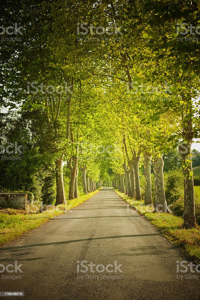 Alley in France royalty-free stock photo