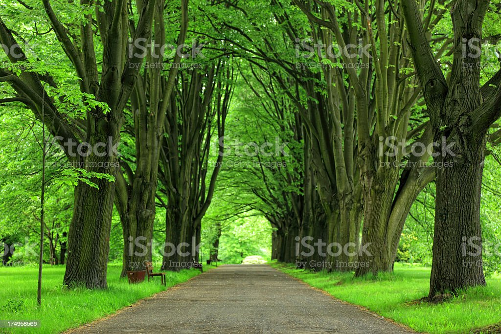 Alley in Park royalty-free stock photo