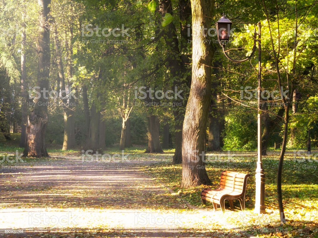 Alley in the autumn park. stock photo