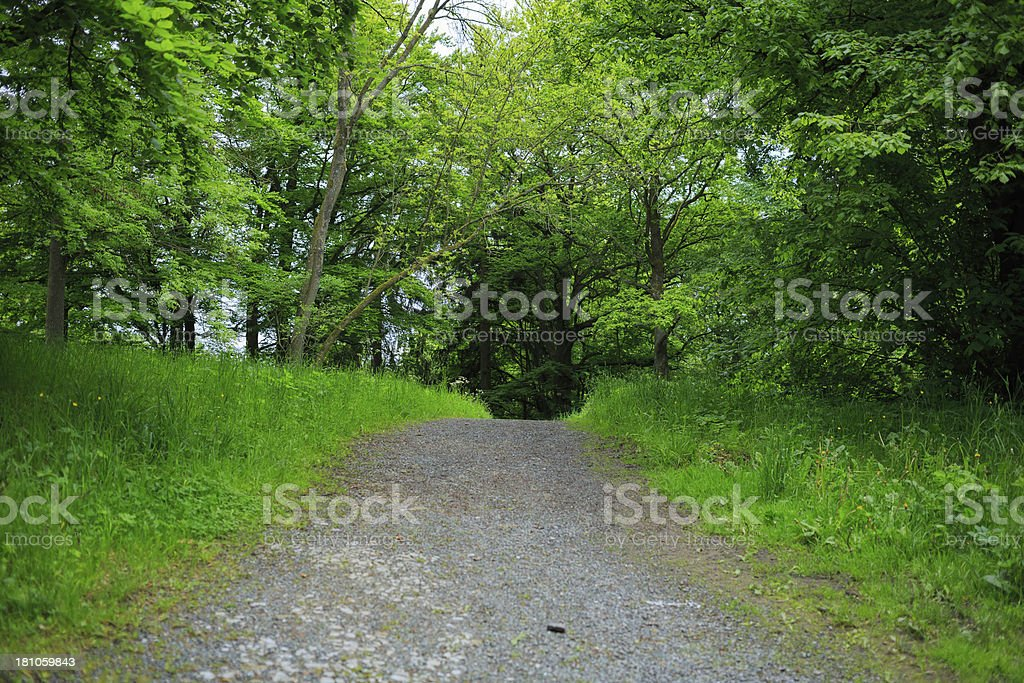 alley in the park royalty-free stock photo