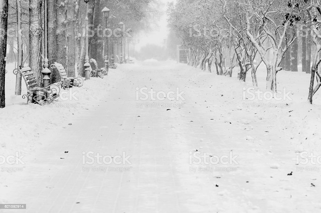 Alley in winter park with benches and lantern during snowfall stock photo