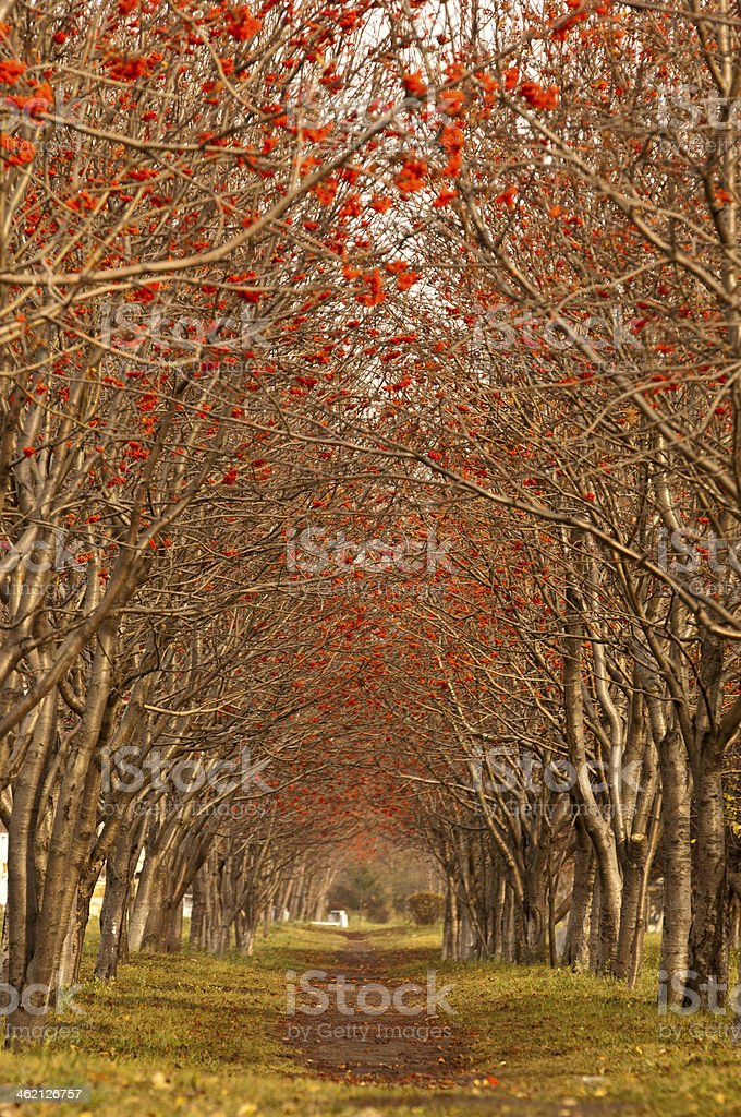 alley in winter royalty-free stock photo