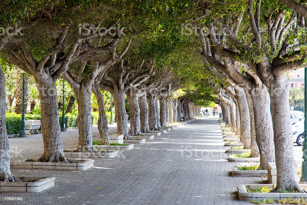 Alley made of tropical trees in Trapani stock photo