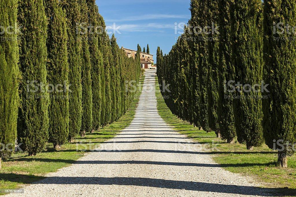 Alley of Cypress, Tuscany, Italy royalty-free stock photo