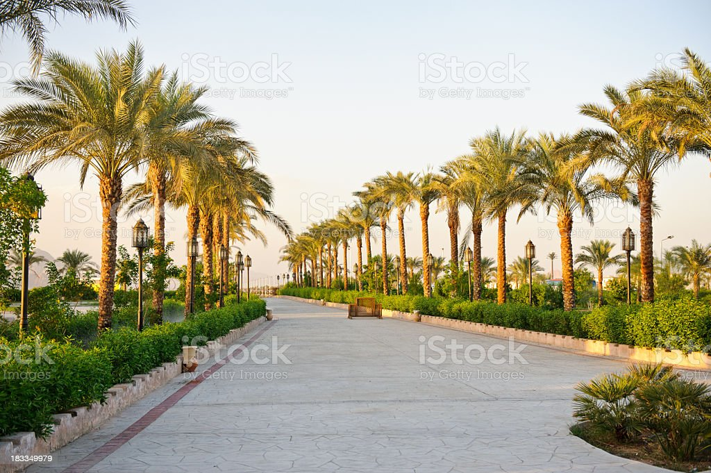 Alleyway lined with palm trees against a clear sky stock photo