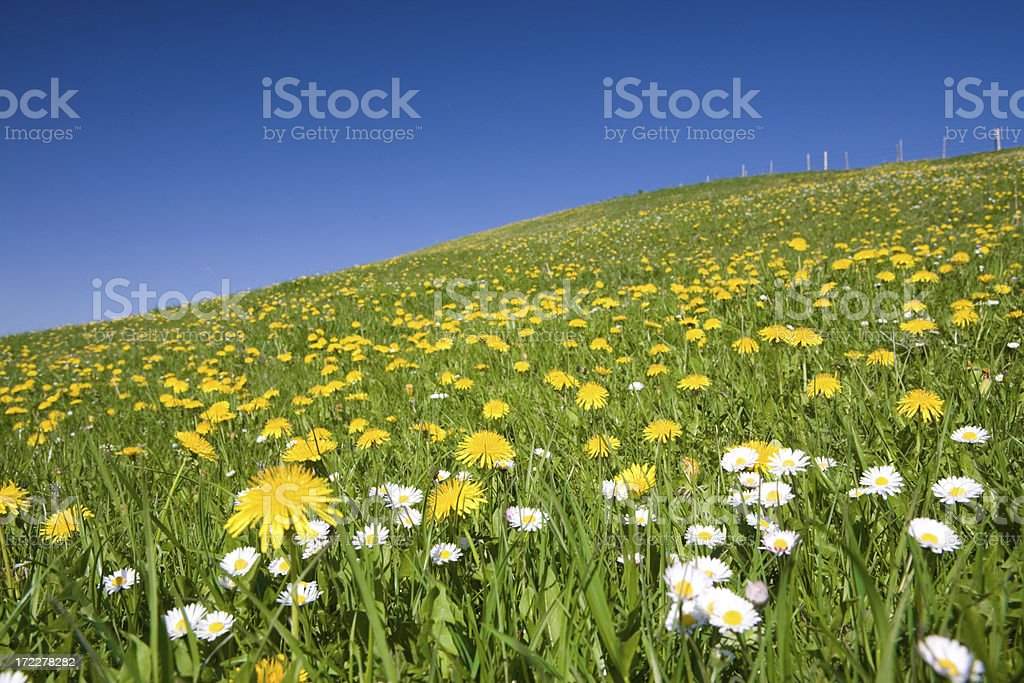 allgaue meadow royalty-free stock photo