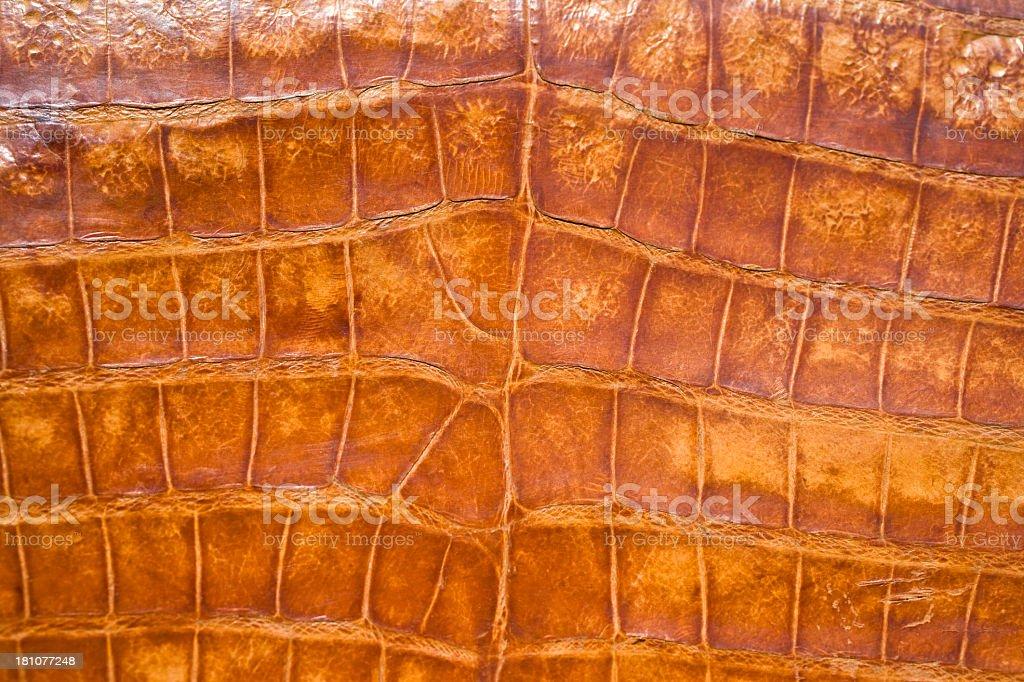 Alligator or Crocodile skin royalty-free stock photo