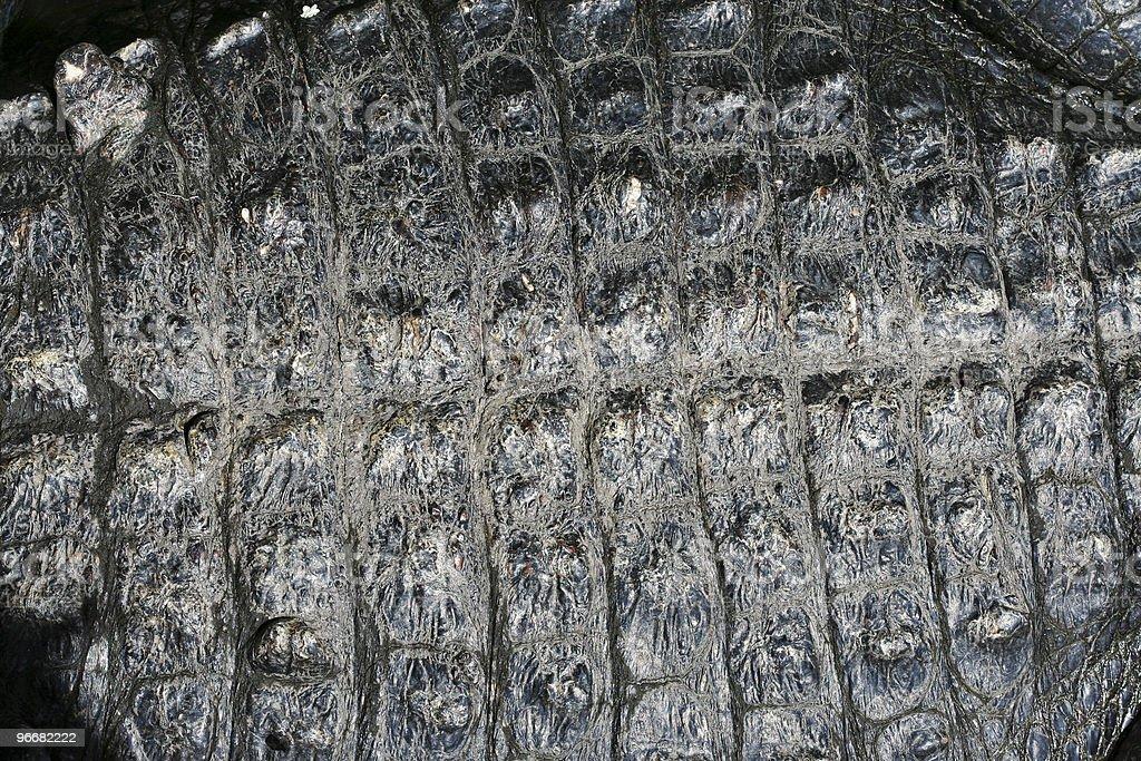 Alligator Skin Texture stock photo