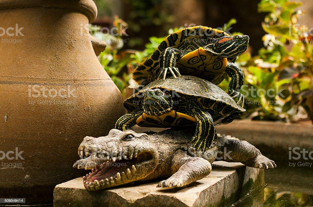 Alligator, toy crocodile, water turtles stock photo