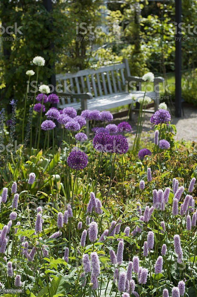 Allium and vintage garden bench royalty-free stock photo