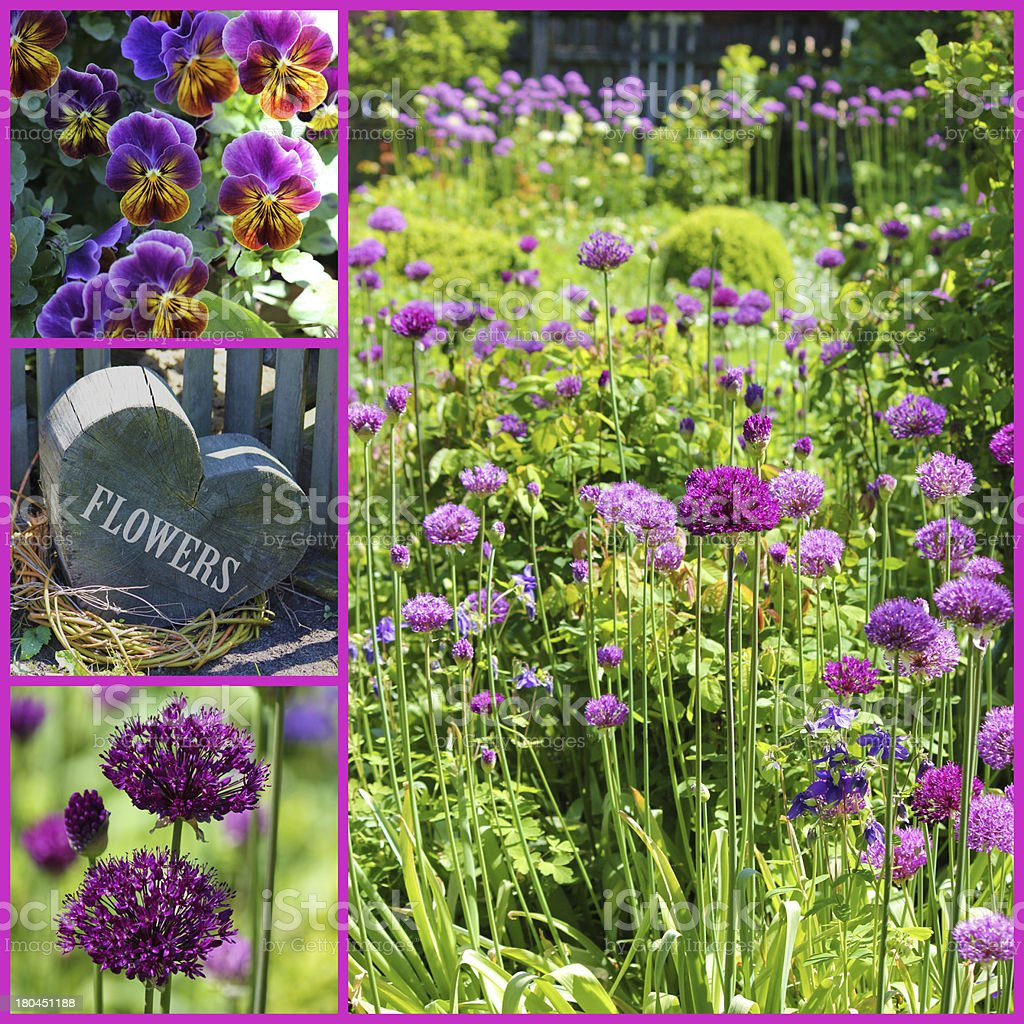 Allium collage, heart with flowers and viola royalty-free stock photo