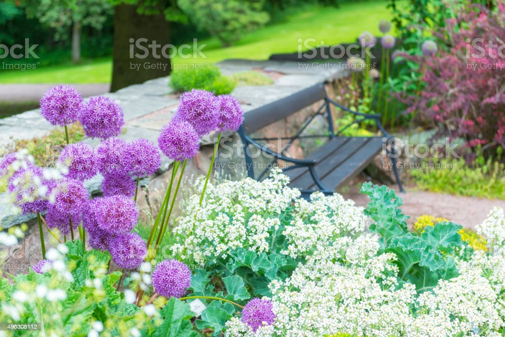 Allium flowers and wooden park bench stock photo