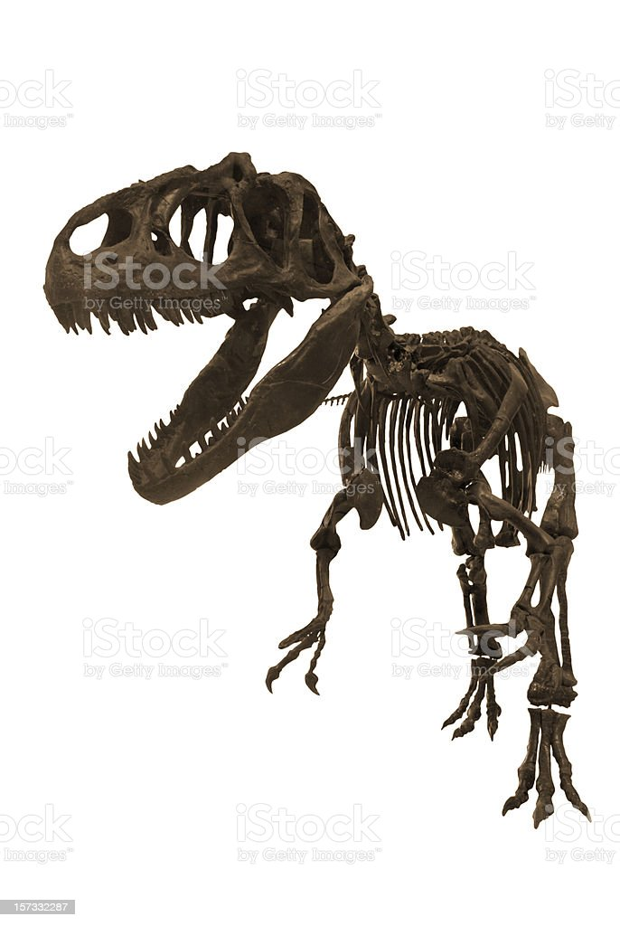 Allosaurus stock photo