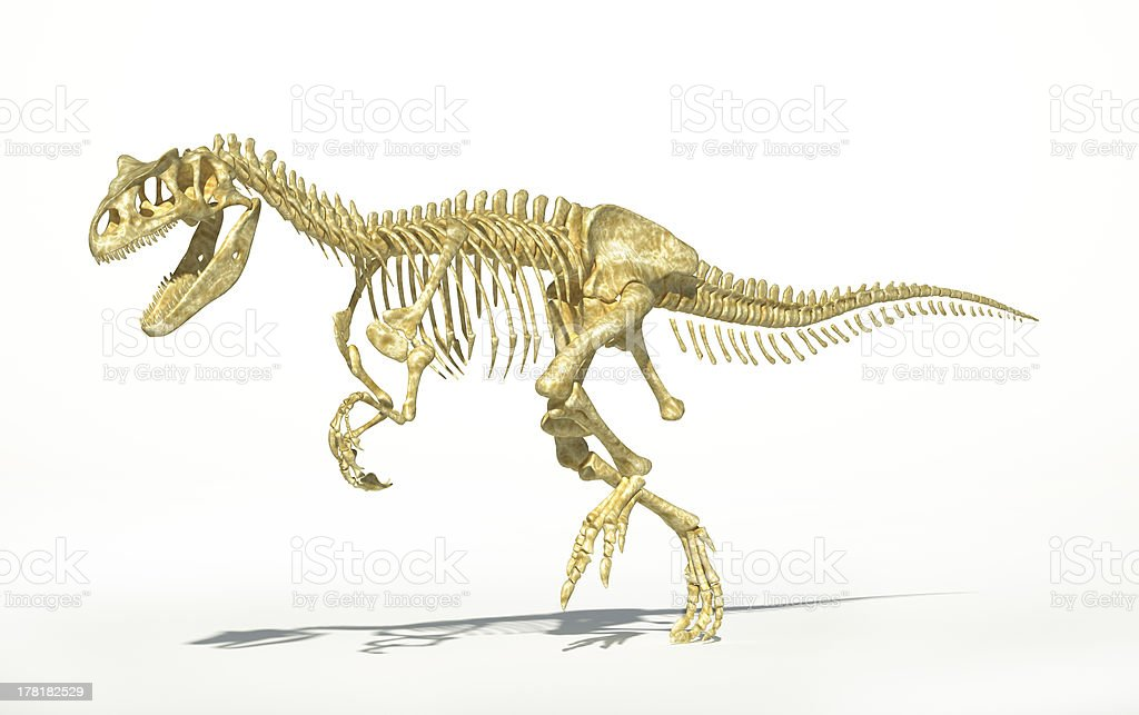Allosaurus skeleton photo-realistic, scientifically correct. stock photo