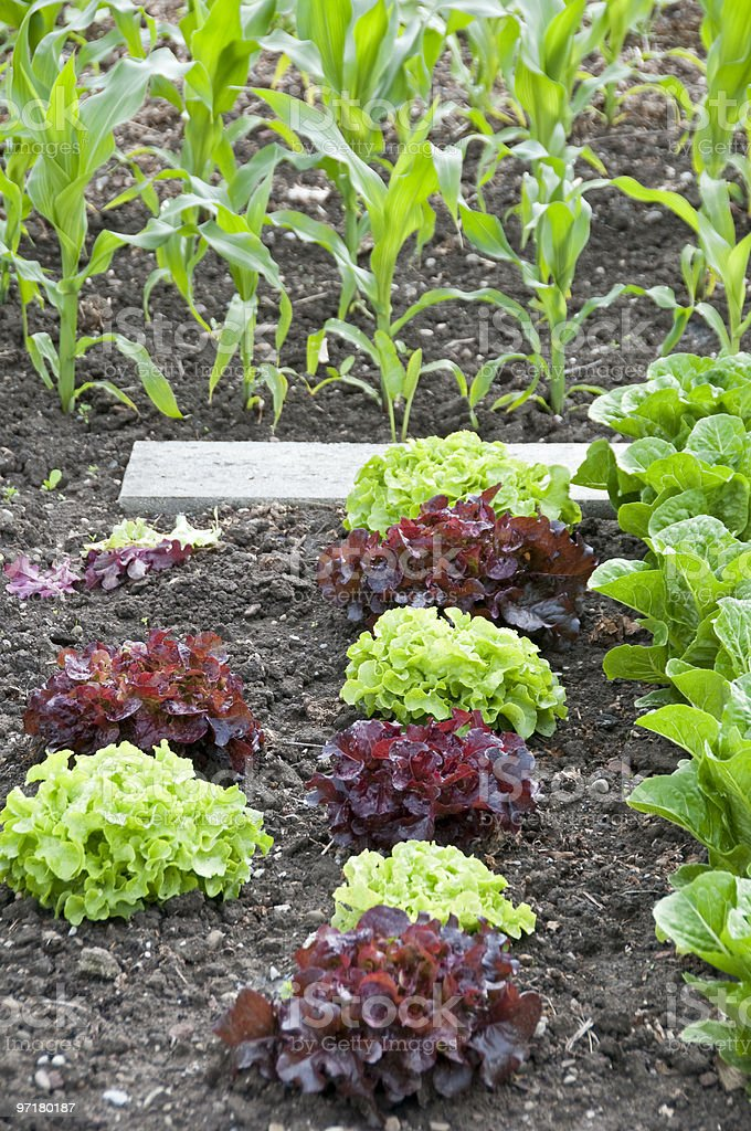 Allotment Garden Bed royalty-free stock photo