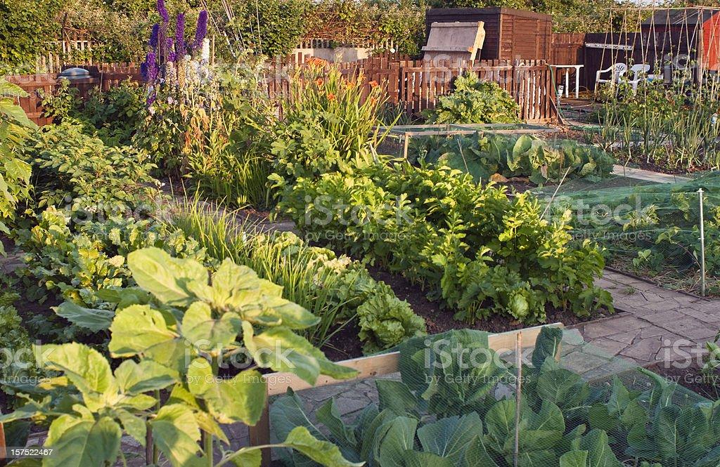 Allotment garden in summer. stock photo